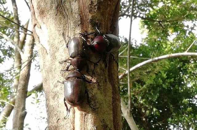 台湾昆虫3.jpg