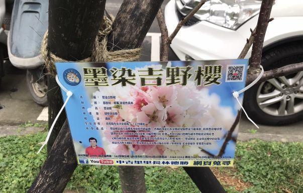 台湾桜2020 03c.jpg